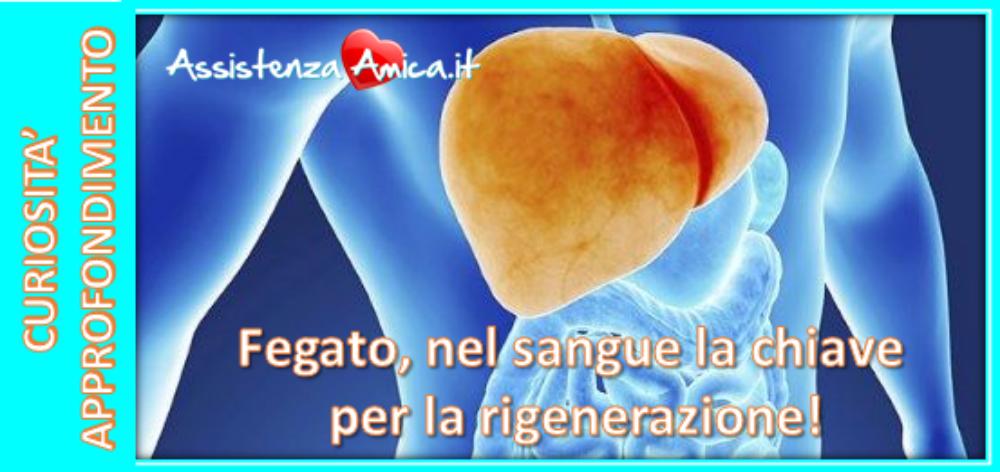 rigenerazione del fegato dopo resezione carciofi e detox