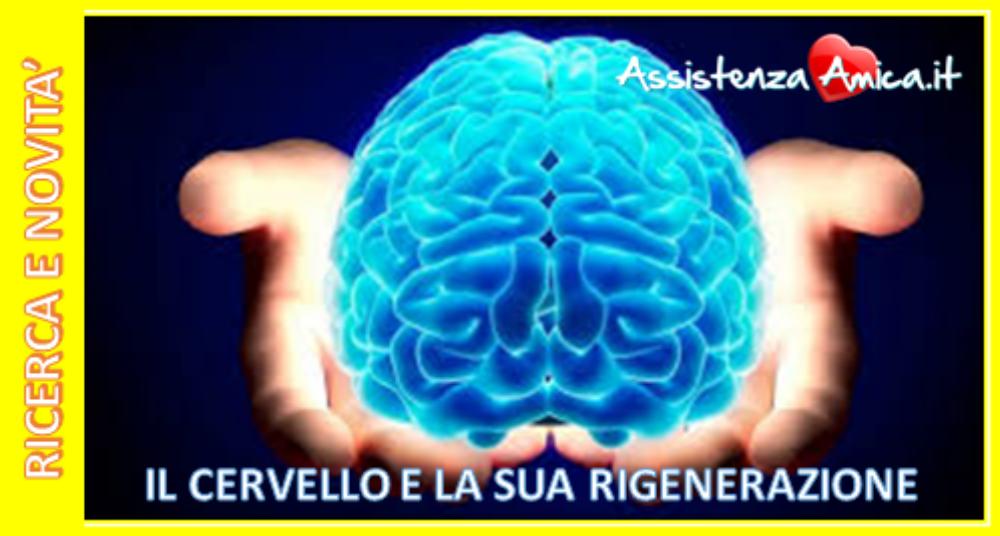 IL CERVELLO E LA SUA CARATTERISTICA POTENZIALE DI RIGENERARSI